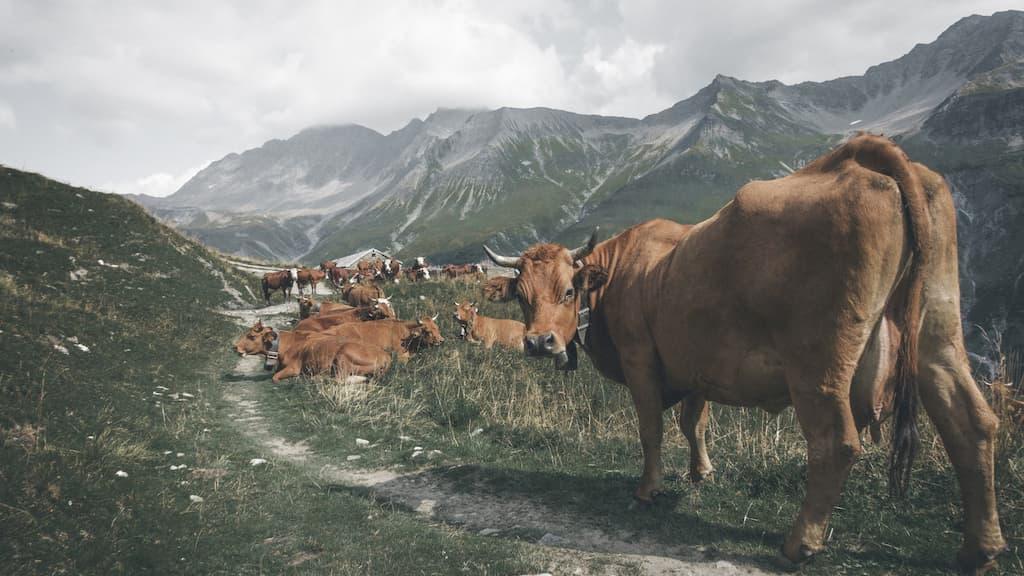 理由2:畜産業の環境への影響
