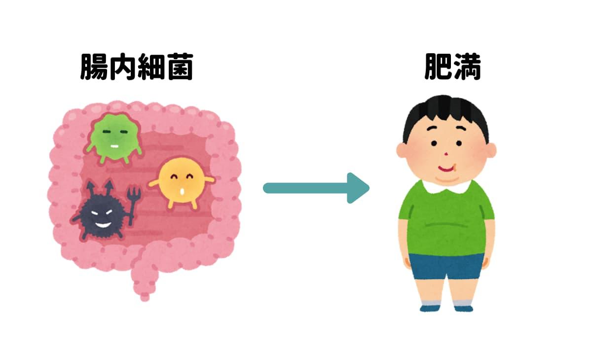 腸内細菌と肥満のイラスト