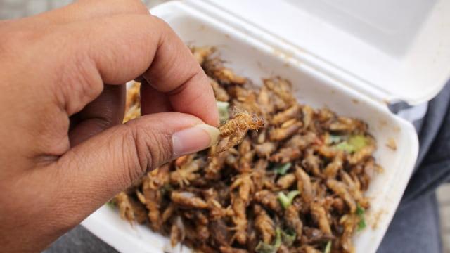 そもそも昆虫食とは?